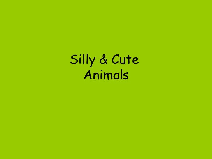 Silly & Cute  Animals