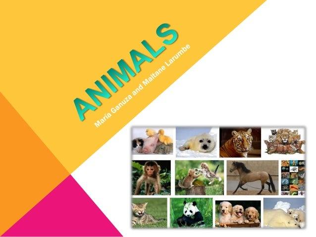 Animals, Maitane & María
