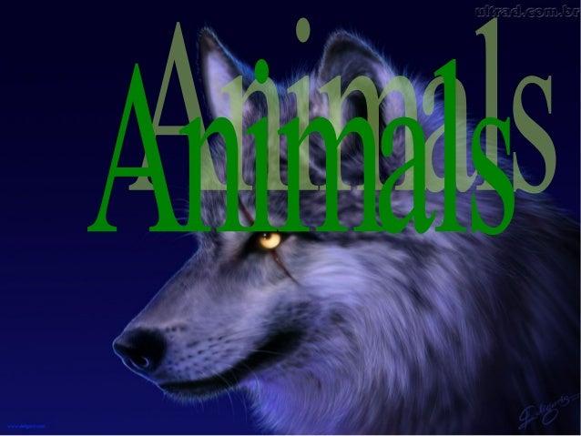 Gray wolvesLobo cinza
