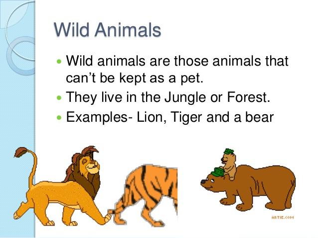 Wild animals images and description