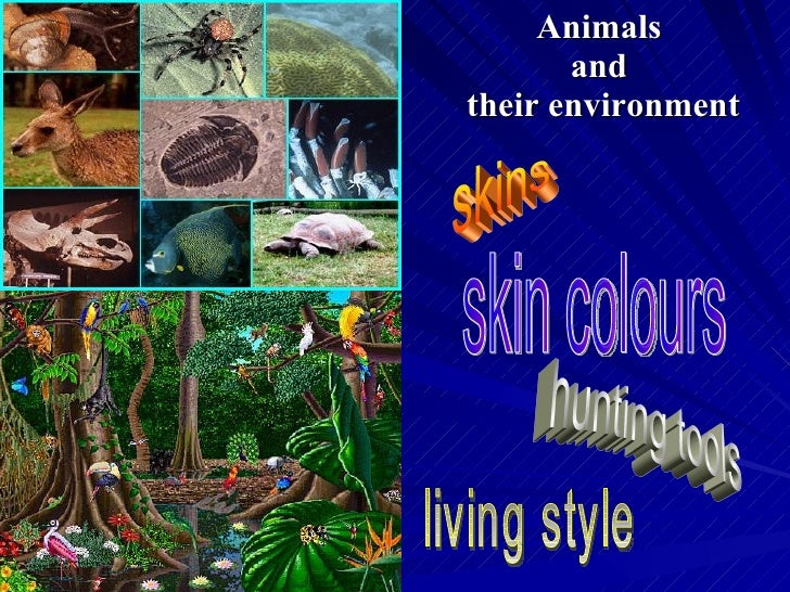 Animals  and  their environment skins hunting tools skin colours living style