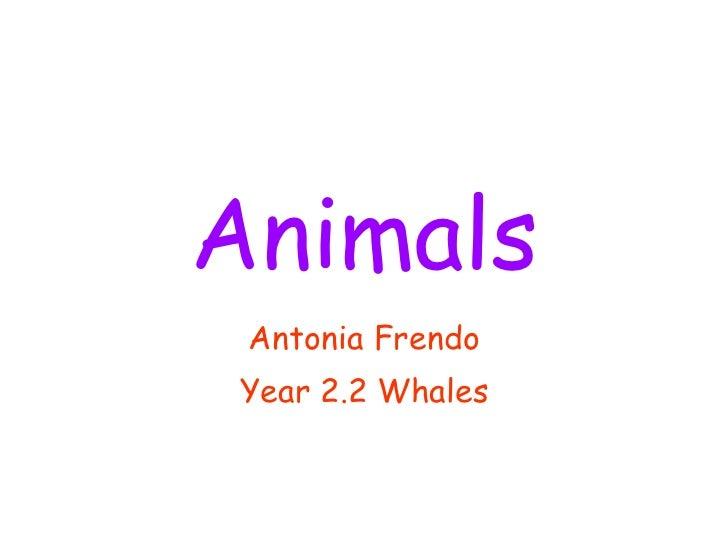 Animals Antonia Frendo Year 2.2 Whales
