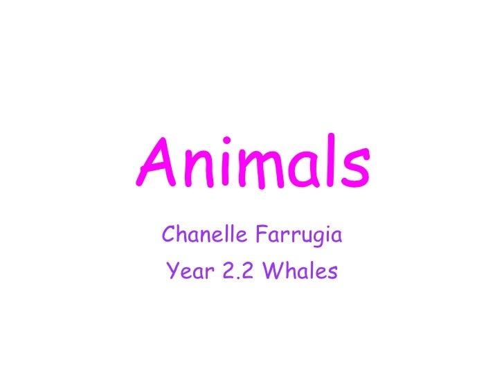 Animals Chanelle Farrugia Year 2.2 Whales