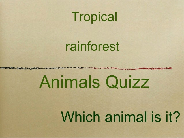 Tropical rainforest animals quizz