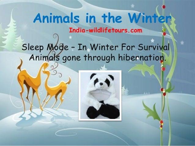 Animals in the Winter           India-wildlifetours.comSleep Mode – In Winter For Survival  Animals gone through hibernati...
