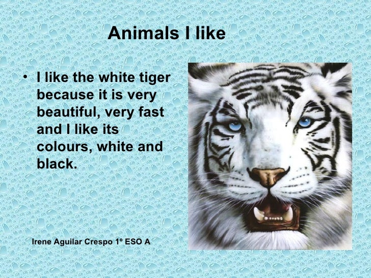Animals I like <ul><li>I like the white tiger because it is very beautiful, very fast  and I like its colours, white and b...