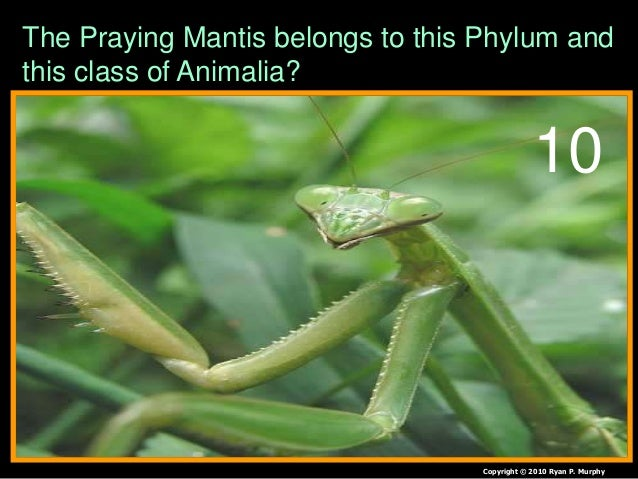 The Praying Mantis bel...