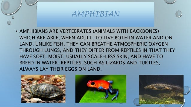 animals and their habitats upload
