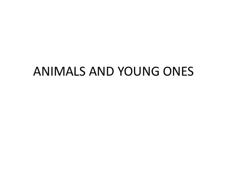 ANIMALS AND YOUNG ONES