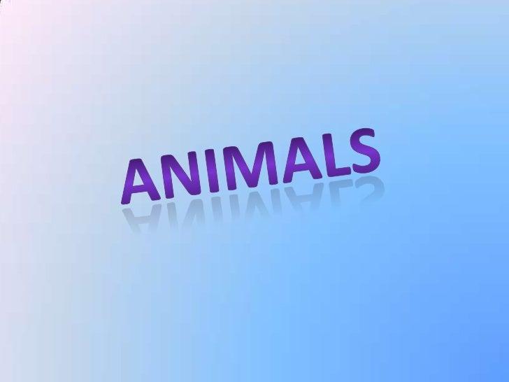 Animals Ania Zarankiewicz