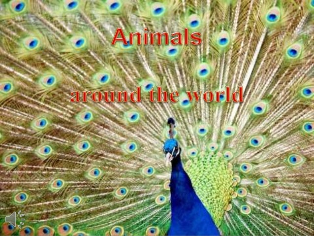 Animals around the world (v.m.)