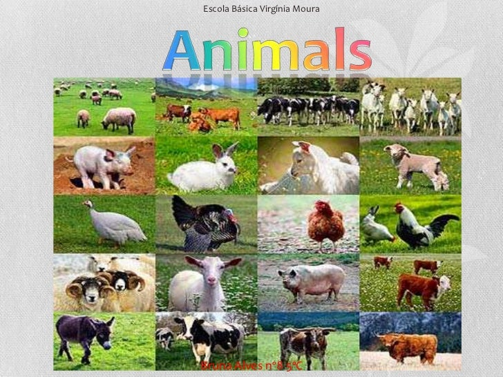 Escola Básica Virgínia Moura<br />Animals<br />Bruna Alves nº8 5ºC<br />