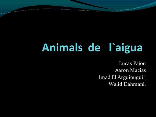 Animals  de   l`aigua
