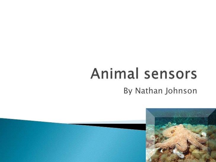 Animal sensors