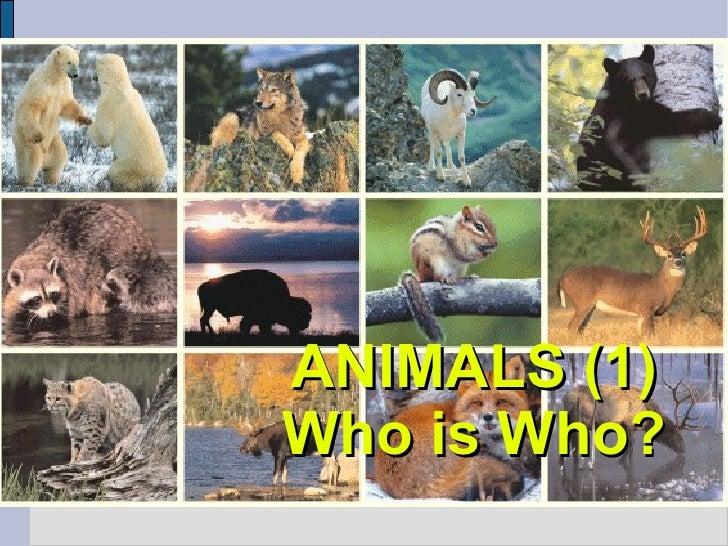 Animals (Gegants)