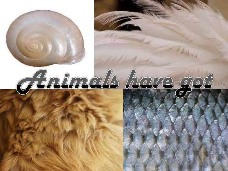 Animals have got