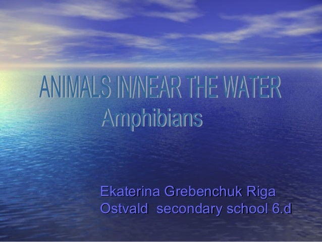 Animals in and near the water j. grebenchuk 6.d
