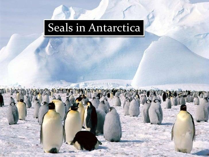 Animals in Antarctica<br />Seals in Antarctica<br />