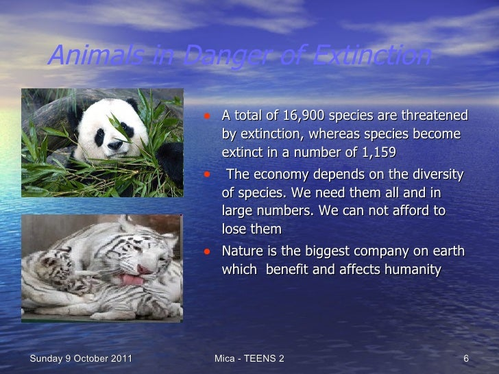 Animals in Danger of Extinction | Causes and Effects of Extinction