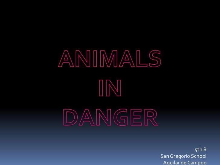 Animals in danger 5th B