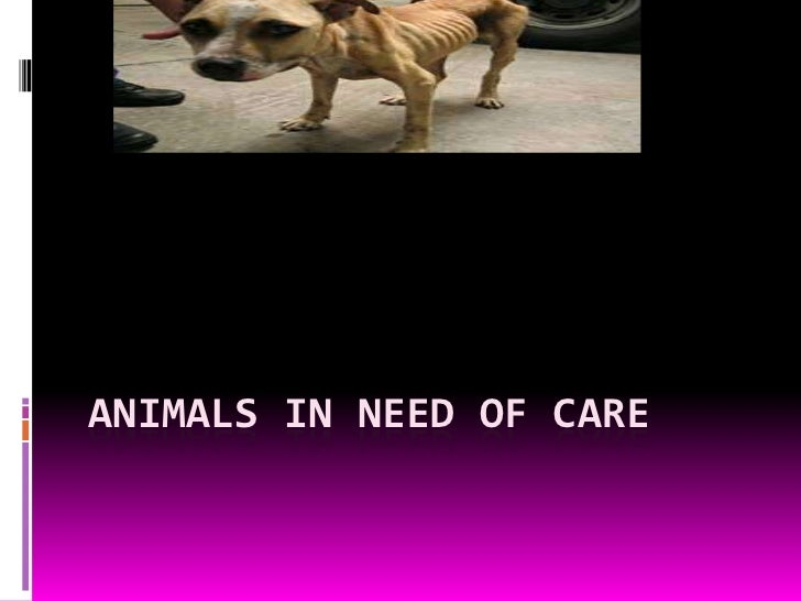 ANIMALS IN NEED OF CARE