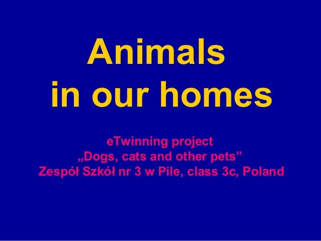 """Animals in our homes          eTwinning project      """"Dogs, cats and other pets""""Zespół Szkół nr 3 w Pile, class 3c, Poland"""