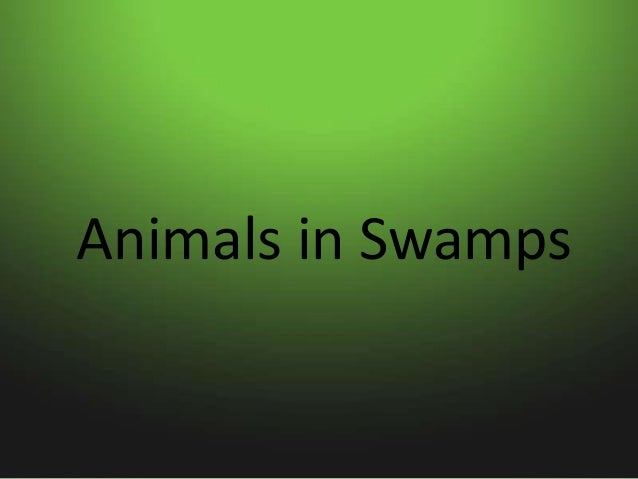 Animals in Swamps