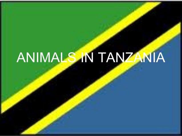 Animals in tanzania john