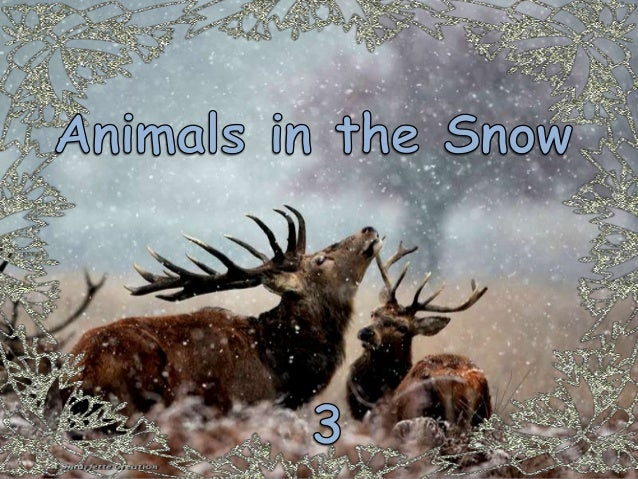 ANIMALS IN THE SNOW 3