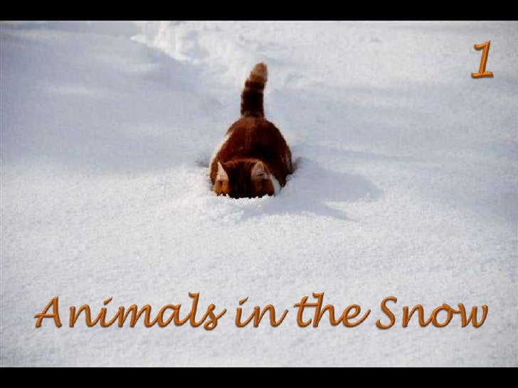 1<br />Animals in the Snow<br />
