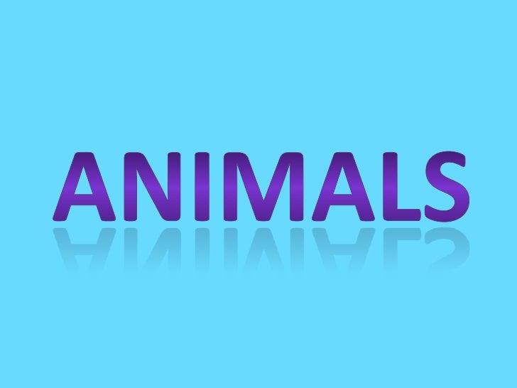 Animals Joanna Stolarczyk