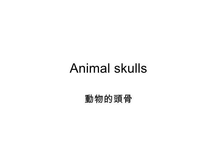 Animal skulls 動物的頭骨