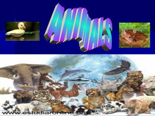 Animals maría and paula