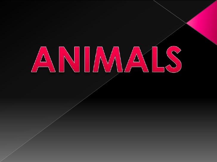 ANIMALS<br />