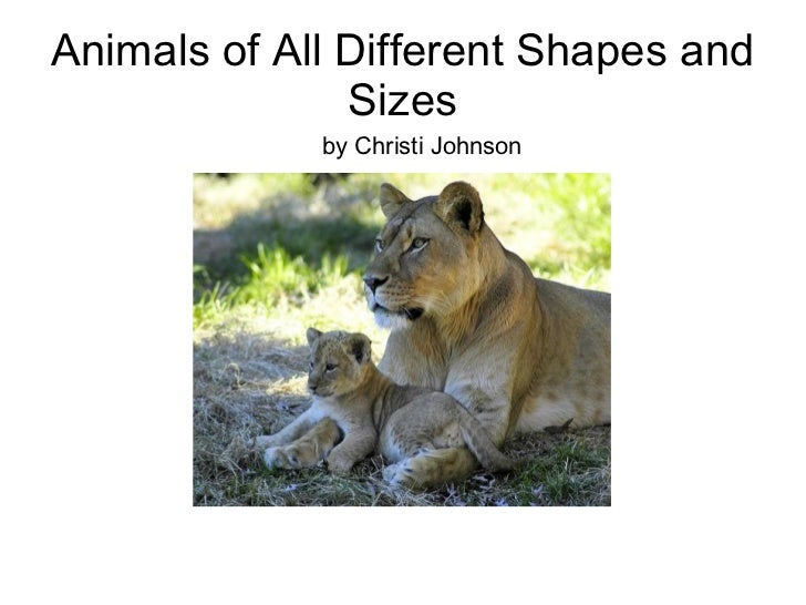 Animals of All Different Shapes and Sizes by Christi Johnson