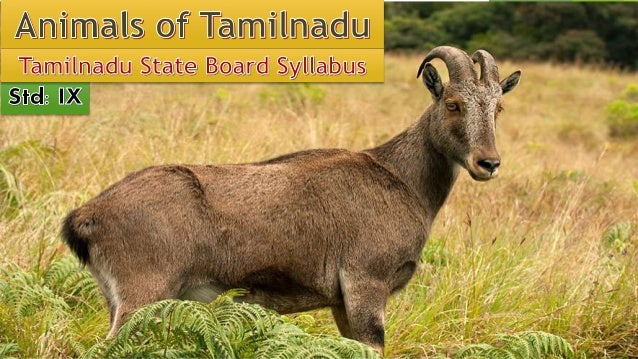 Animals of tamilnadu