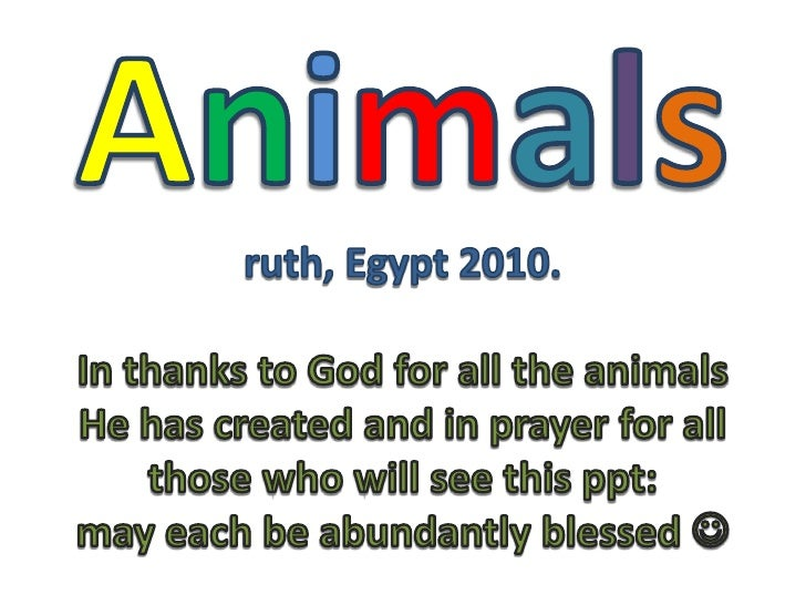 Animalsruth, Egypt 2010.In thanks to God for all the animals He has created and in prayer for all those who will see this ...