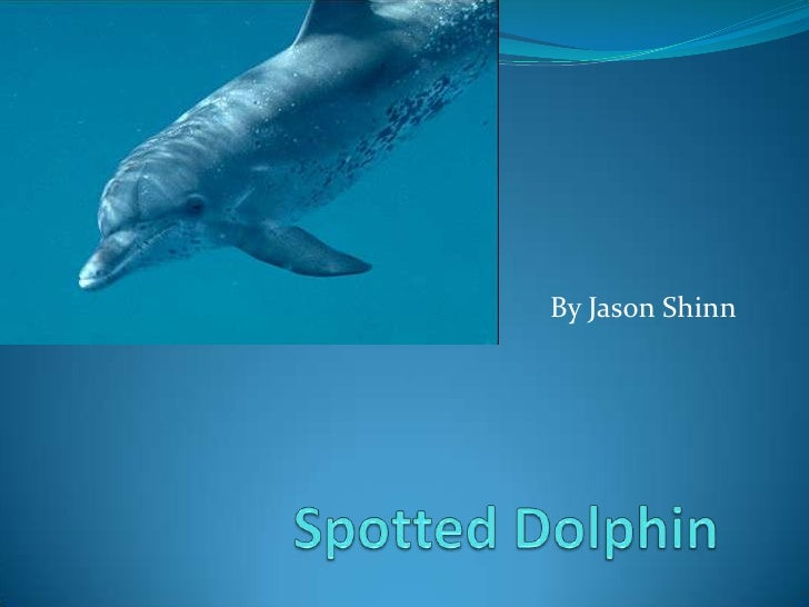 Spotted Dolphin<br />By Jason Shinn<br />