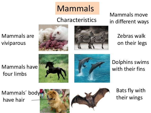 Animals Unit 5 Pdf