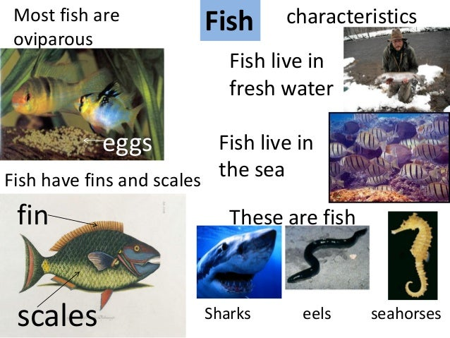 Laura 39 s class natural science unit 3 animals for Characteristics of fish