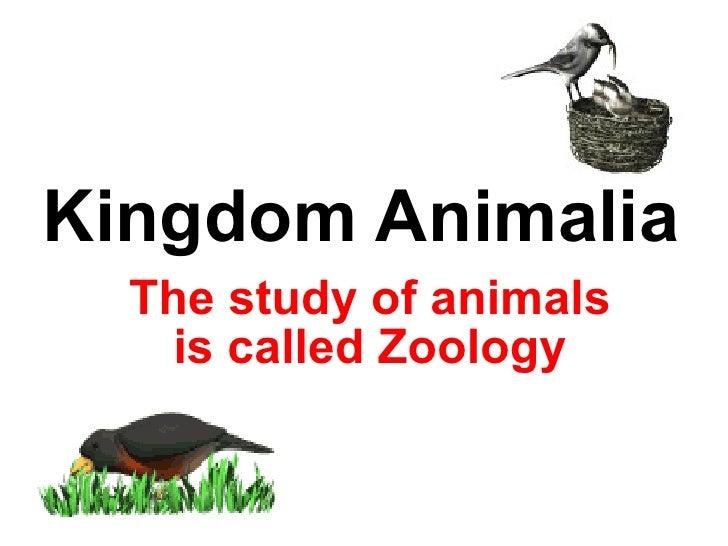 Kingdom Animalia The study of animals is called Zoology