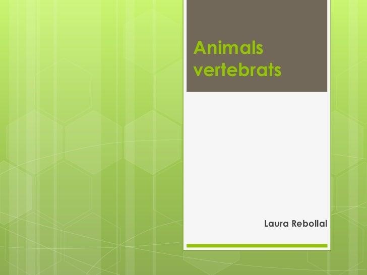 Animalsvertebrats        Laura Rebollal