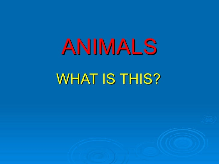 ANIMALS WHAT IS THIS?