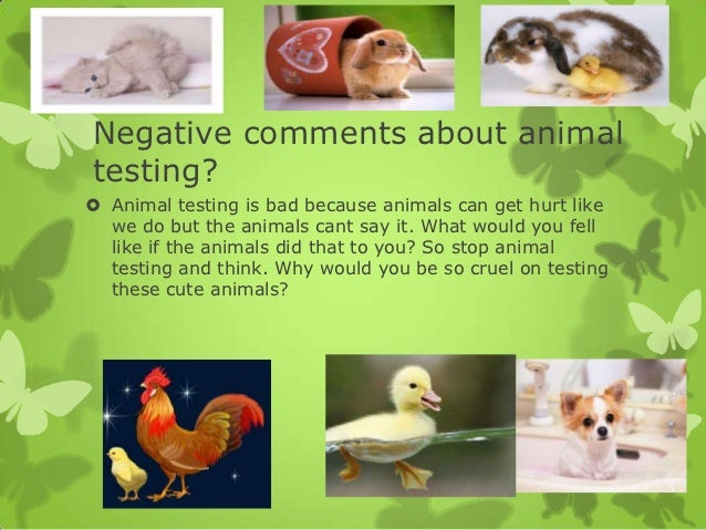 for animal testing essay