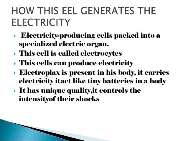 Electric Organ Eel Electric Eel