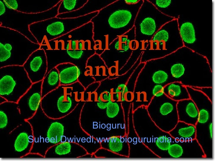 Animal Form  and  Function Bioguru  Suheel Dwivedi,www.bioguruindia.com