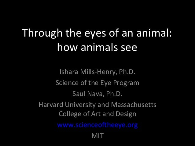 Through the eyes of an animal:      how animals see         Ishara Mills-Henry, Ph.D.        Science of the Eye Program   ...