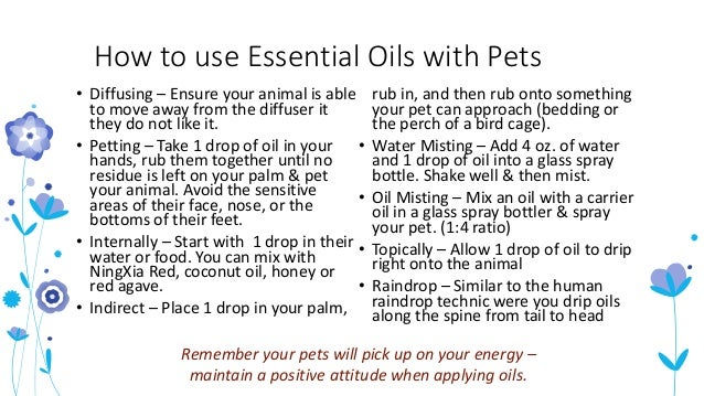 Animal Wellness With Essential Oils