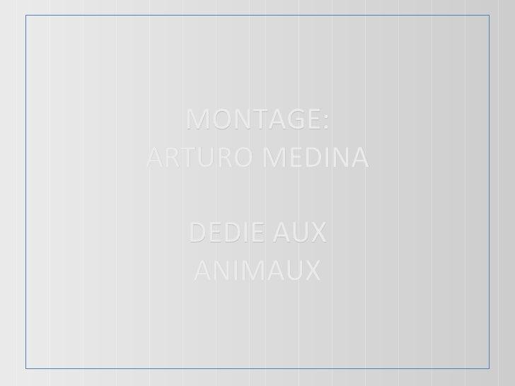MONTAGE: ARTURO MEDINA DEDIE AUX ANIMAUX