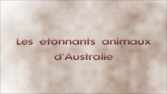 Les étonnants animaux d'Australie